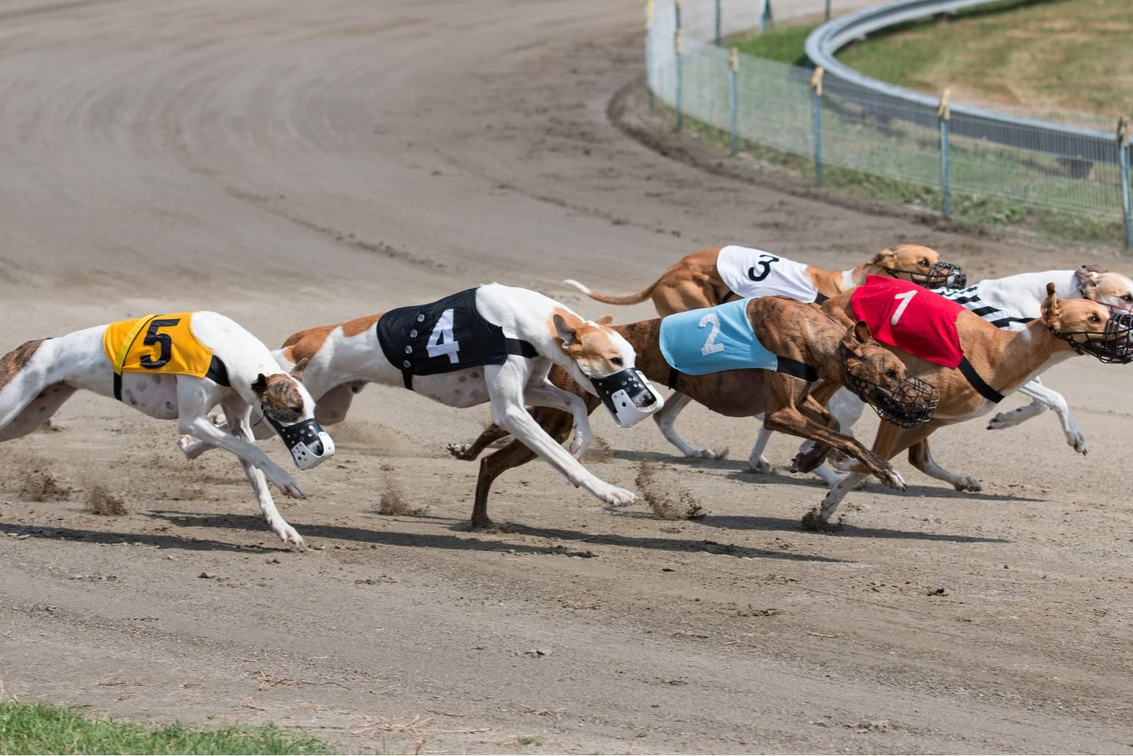 скорость бега собаки