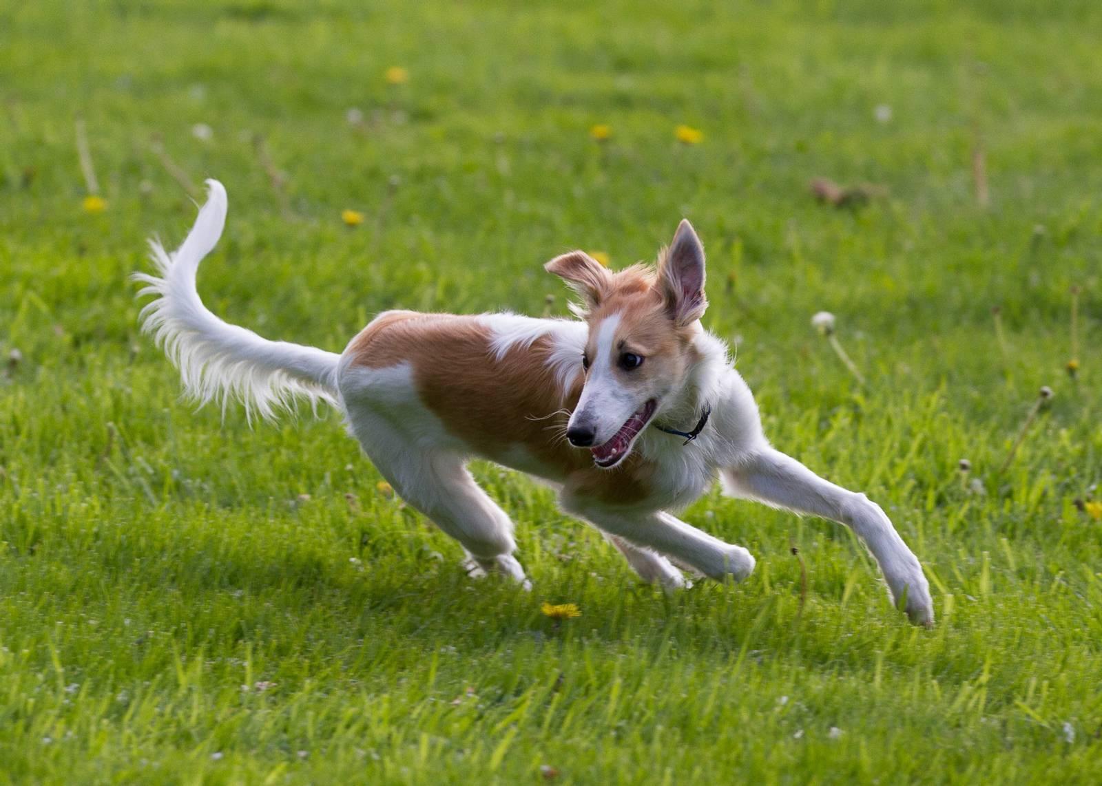очень картинки собака бежит осознаем важность четко
