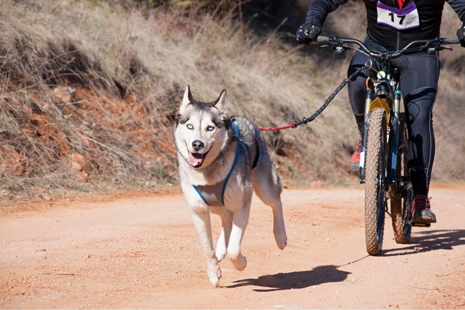 велоспрингер для собак