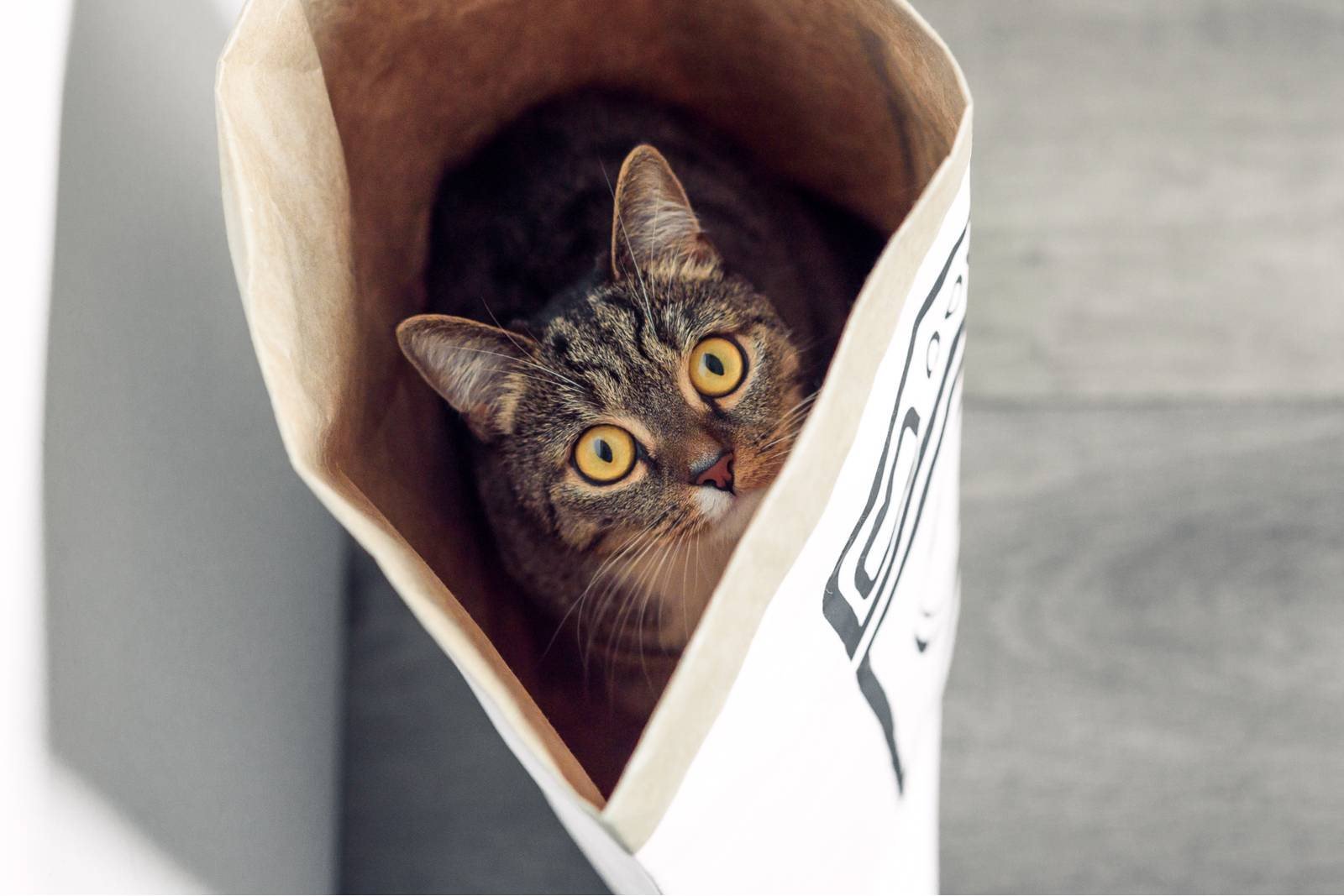 кошка любит пакеты