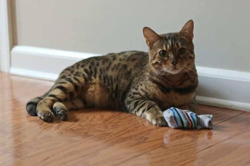 Пуфик из носка для игры с кошкой