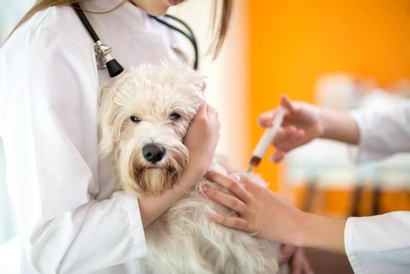 симптомы астмы у собак