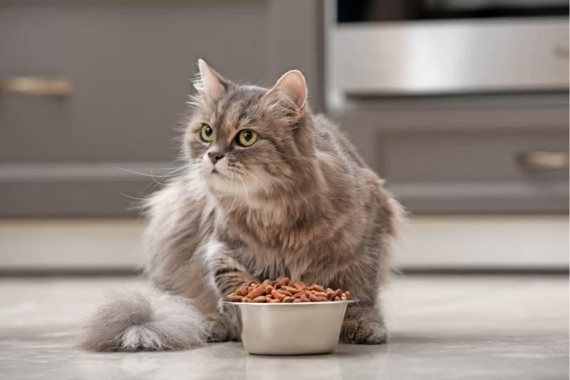 лечебный корм для кошек при заболевании