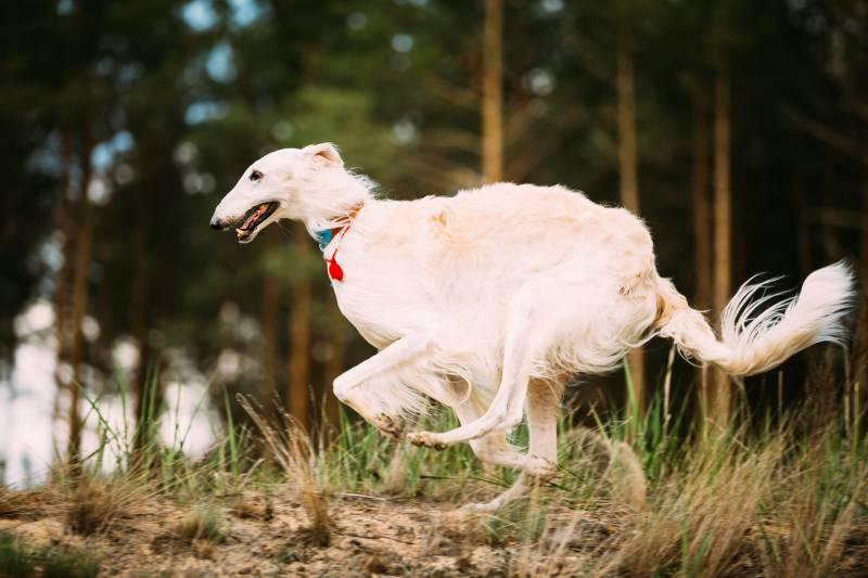 охотничье собаководство форум