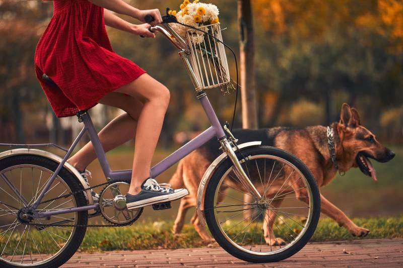 велоспрингер для собак купить