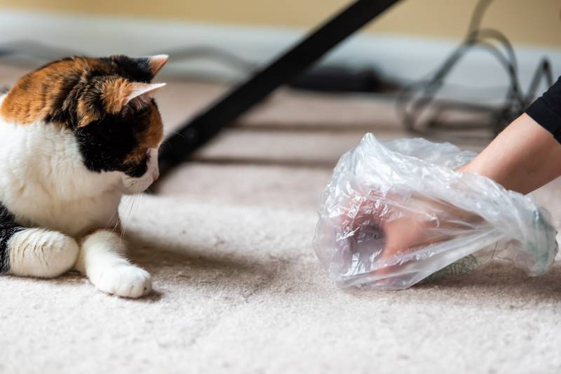 почему кошки любят пакеты