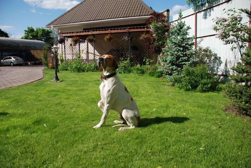 уход и содержание собаки породы герта пойнтер