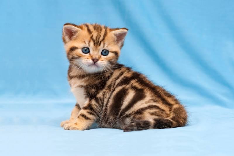 как научить кота отзываться на кличку