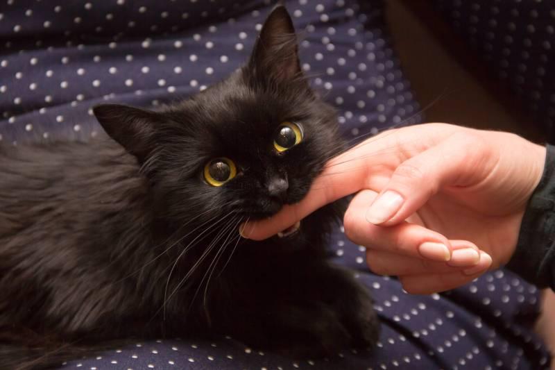 кошка начала кусаться когда ее гладишь