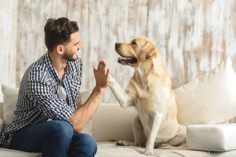 какую собаку лучше завести