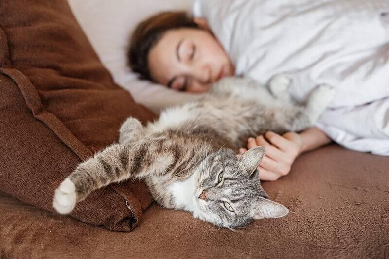 почему кошка спит рядом с человеком