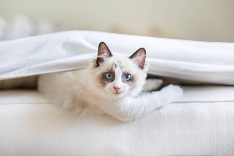 кошка рано будит утром