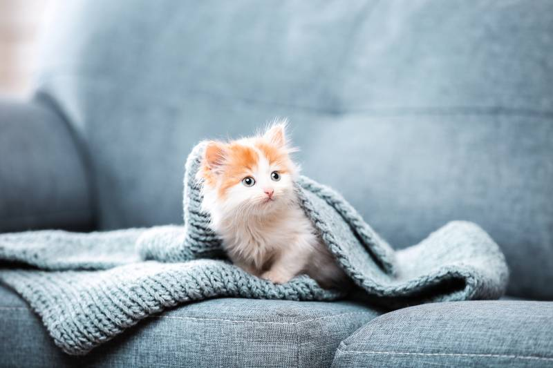 как приучить кошку к кличке