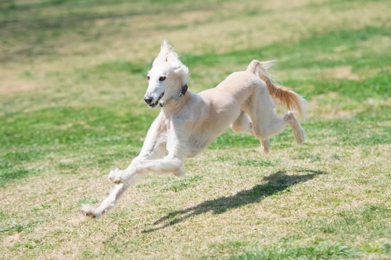 с какой скоростью бегает собака