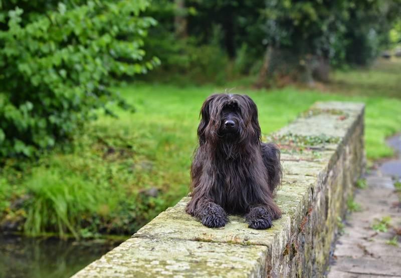 фото собаки породы веллер