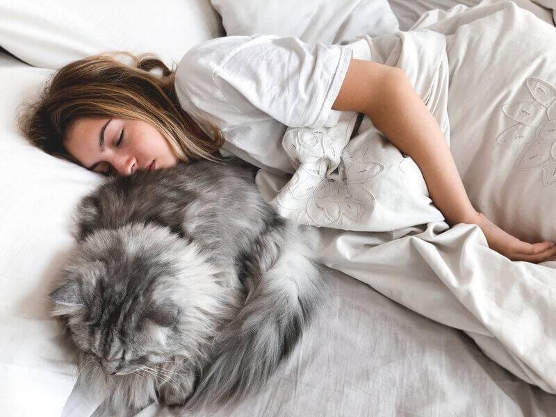 почему кошка или кот спит на человеке