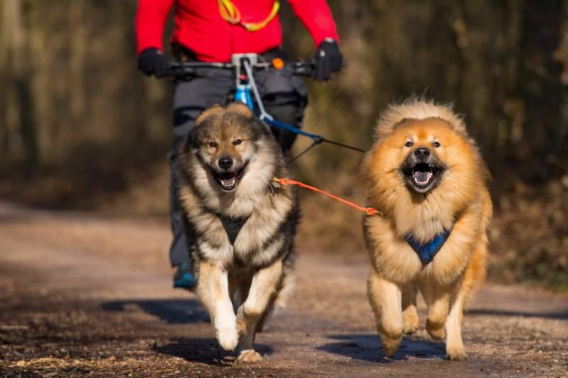 велоспрингер для собак купить в спб