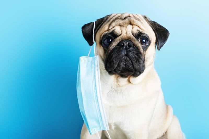 диагностика астмы у собак