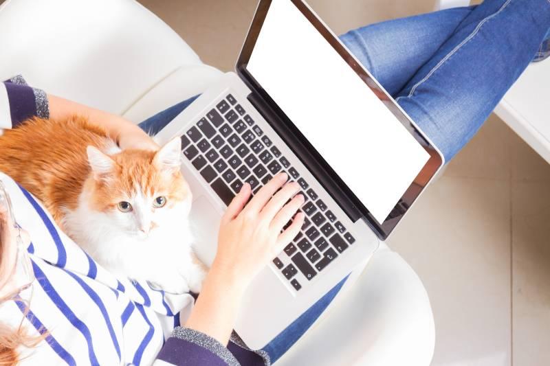 как кошку отучить гадить в неположенном месте