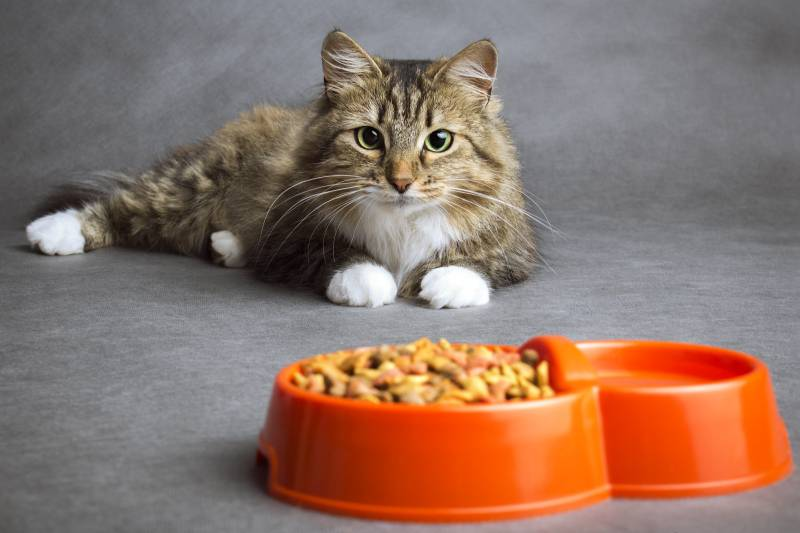проплан лечебный корм для кошек