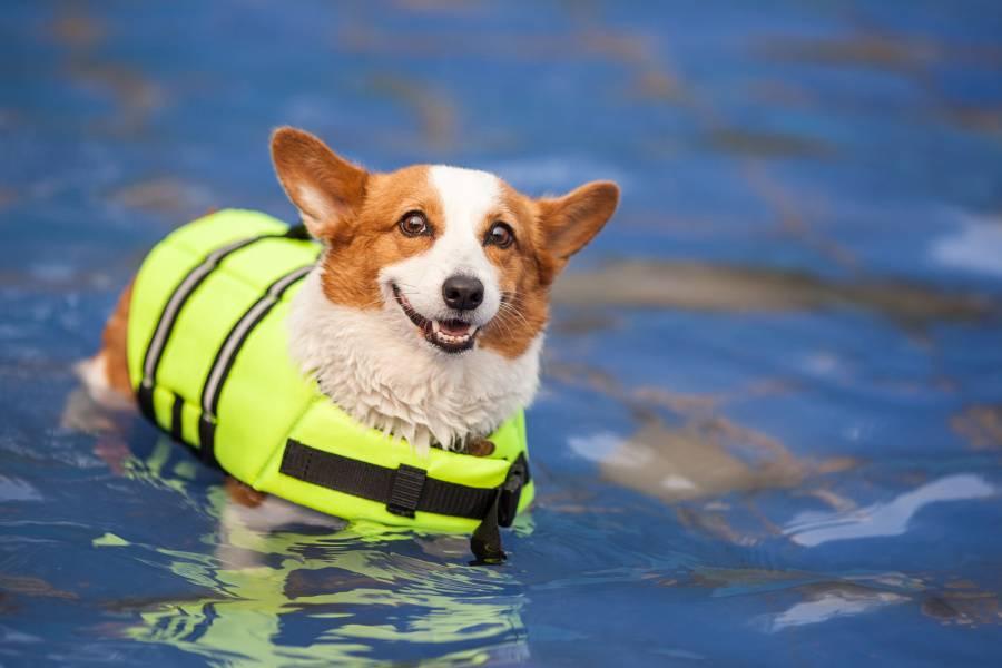 """Картинки по запросу """"Спасательные жилеты для собак"""""""